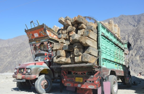 Pakistan's timber mafia threaten forest protection plans – environmentalists