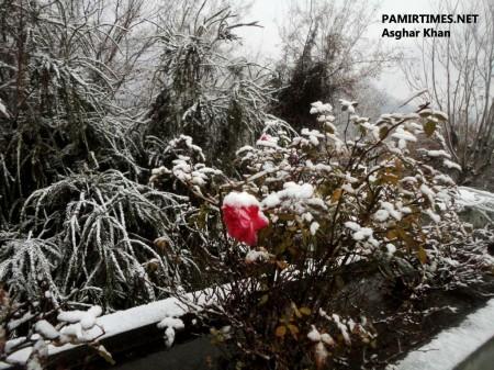 Gilgit Snowfall (1)