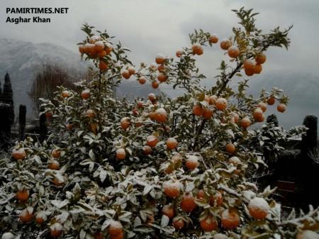Gilgit Snowfall (3)