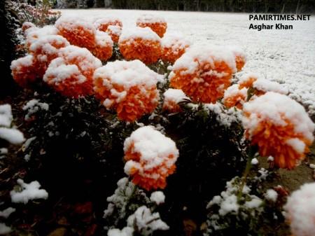 Gilgit Snowfall (4)