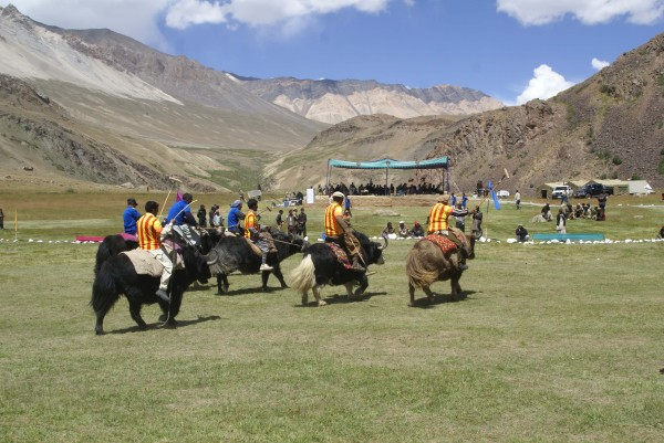 Polo on Yak is not as fast as the polo played on Horses