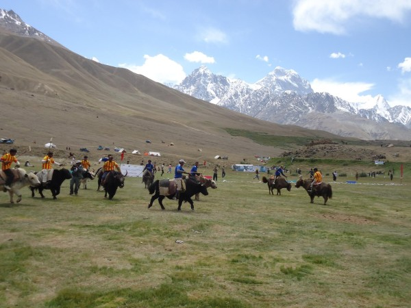 Polo being played on Yaks!