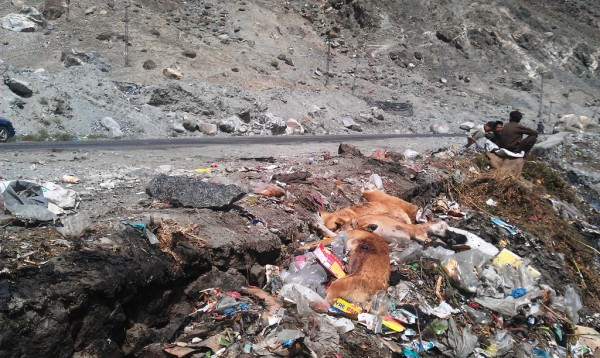 Dead stray dogs, most probably shot by the police, have been dumped in the area. Photo: Farman Karim Baig