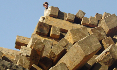 A man sits on top a pile of  timber in Chilas. Photo: Online