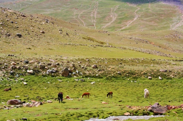 Cases involving ownership and grazing rights over pastures are common in the mountain communities