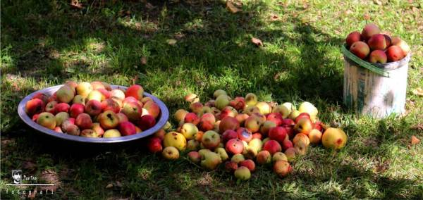 The socities have not adopted methods for long-term storage of fruit