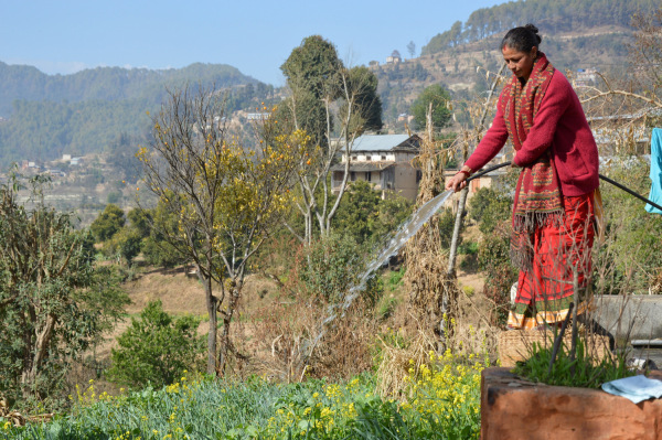 A farmer waters her vegetable field in Panityanki, a picturesque mountain village in Nepal's Kavrepalanchowk district, about 35 kilometers from Kathmandu. TRF /Saleem Shaikh