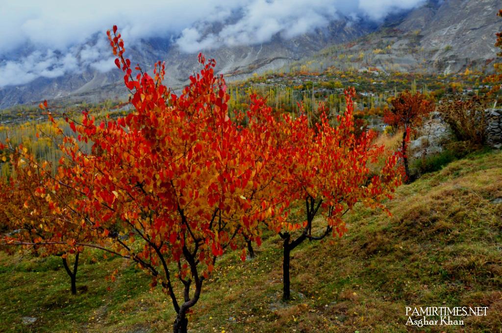 HSI Garden Apricot Autumn