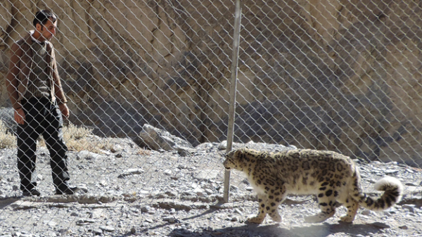 The leopard was a 2kg cub when it was found
