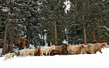 [Photo Feature] The cold beauty of Naltar Valley