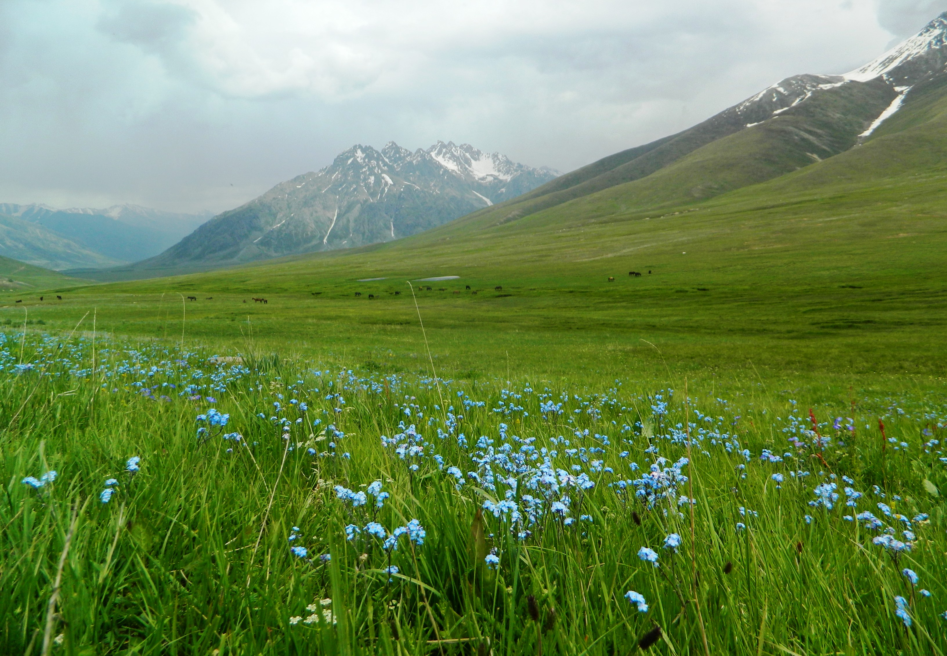 WWF – Pakistan expresses concern over the proposed Deosai Festival