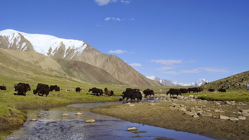 Before becoming a National Park, Khunjerab used to be a grazing land for many villages located in the Gojal Valley