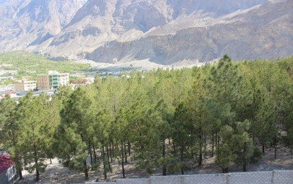 Gilgit: 2800 trees could be chopped down to construct a govt building