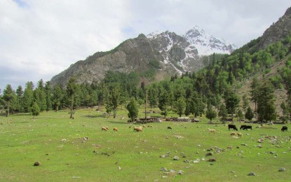 A lift to Naltar