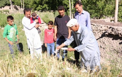 "The harvest festival ""Chineer"" celebrated in lower parts of Gojal valley"