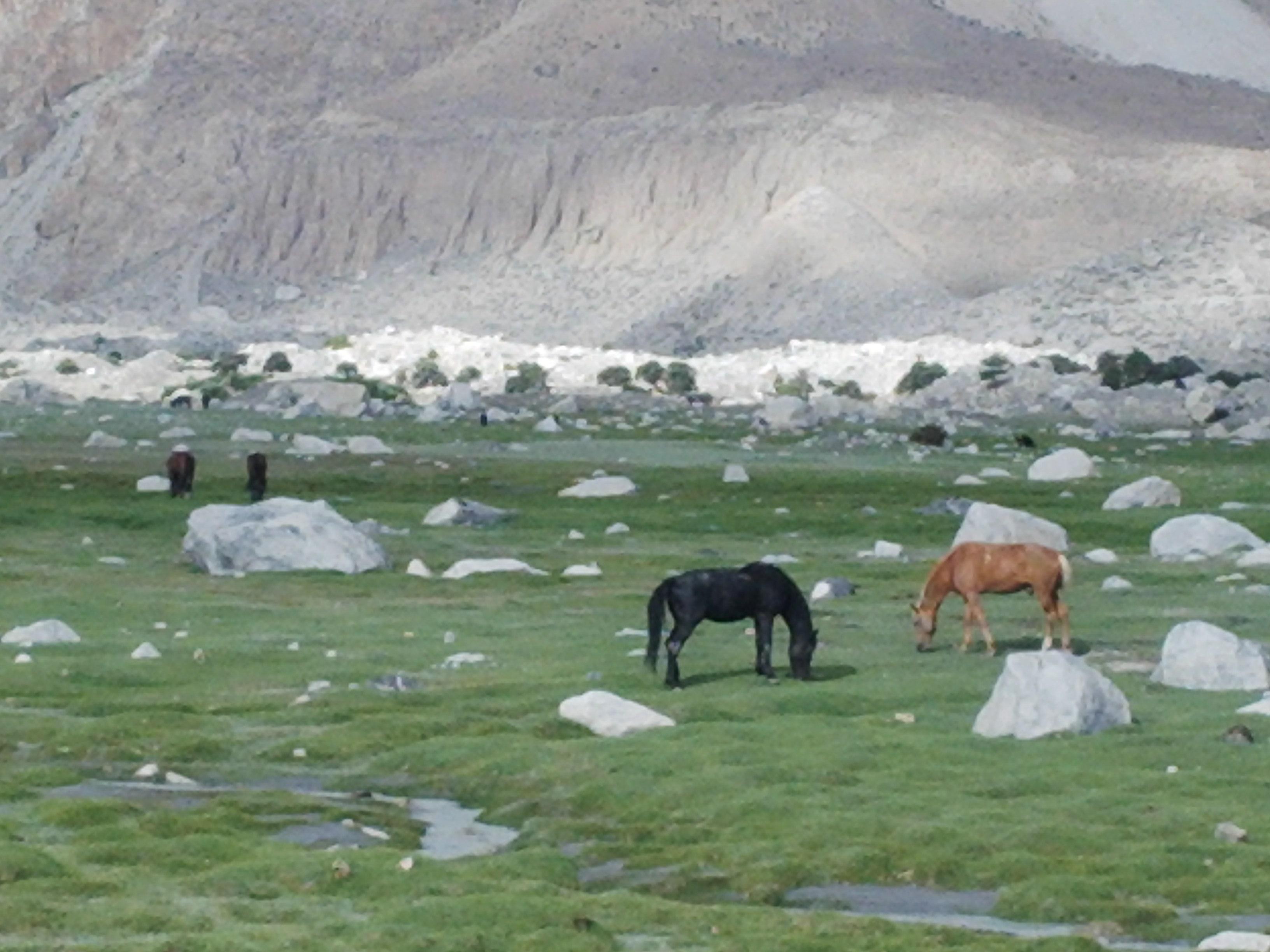 Yeshkuk Pasture at 3500 meters