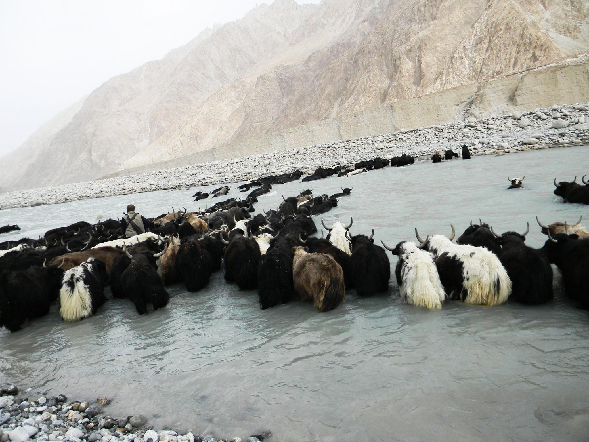 Crossing the Shimhsal River