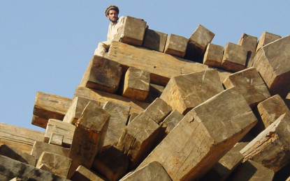 Transparent mechanism for GB timber disposal urged