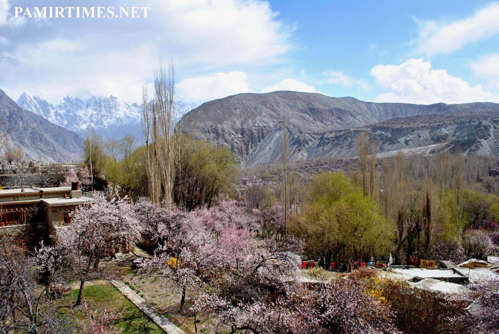 Japanese tourists visit Shigar valley to enjoy apricot and cherry blossom