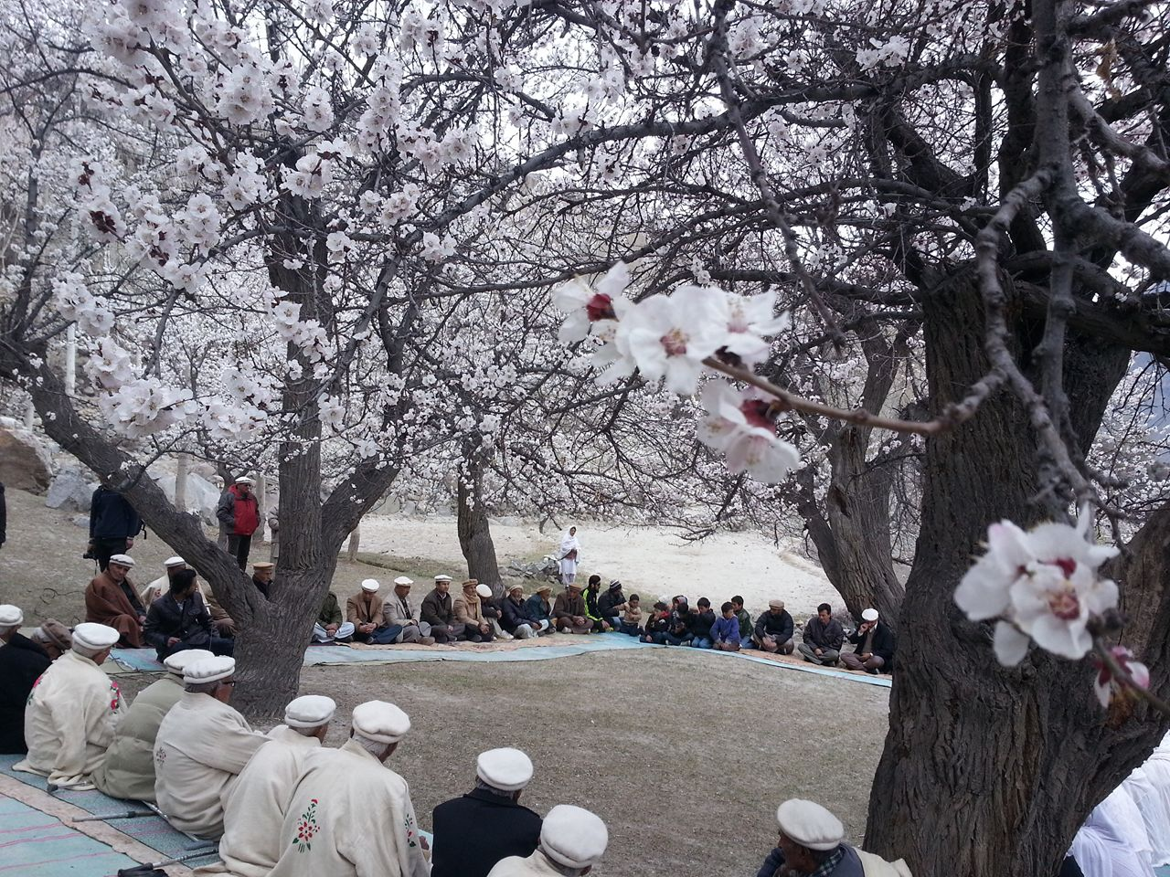 Senior citizens celebrate apricot blossom in Gojal