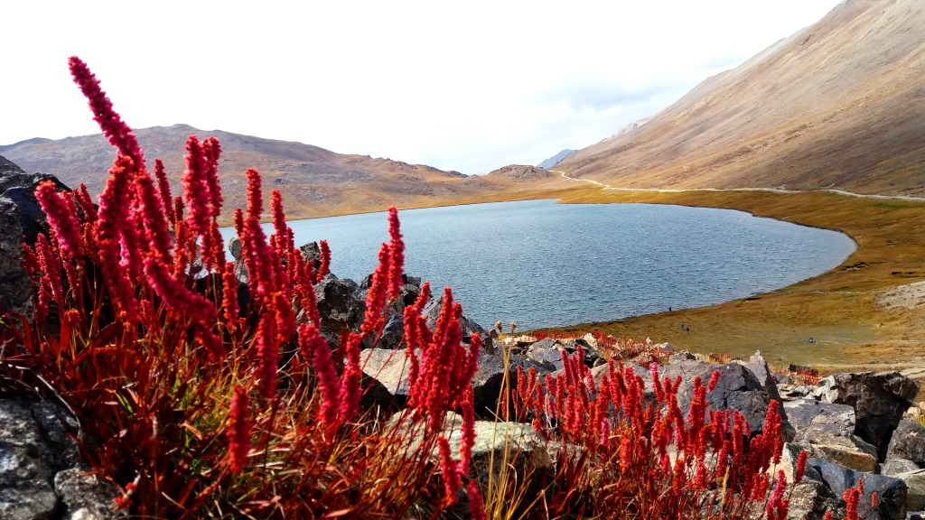 The brilliant early autumn colors of the Deosai National Park