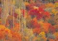 Autumn in Gilgit – Video Report
