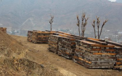 KP govt's softened policy to facilitate timber mafia