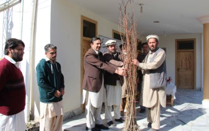 Plantation drive launched in Chitral with free distribution of saplings