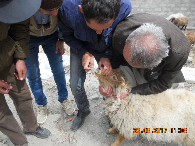 """19 """"Ecosystem Health Workers"""" trained on animal husbandry and livestock health issues"""