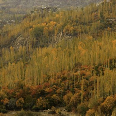 Agro-Foresters of Gilgit-Baltistan (IV)
